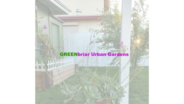 Urban Gardening in Arizona