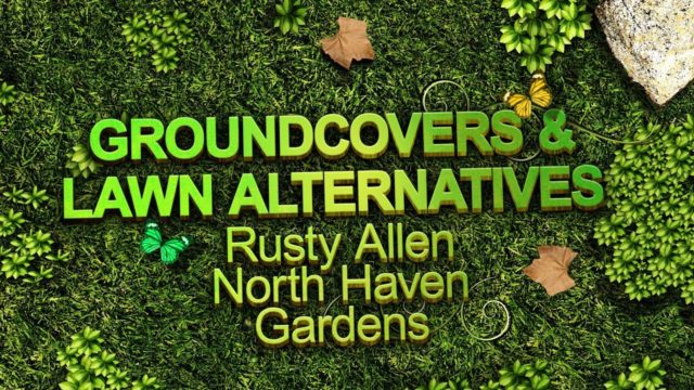 Groundcover and Lawn Alternatives – Sustainable Landscape Series