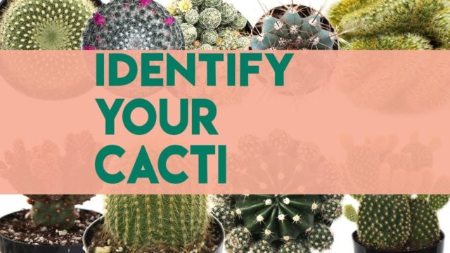 Cacti Identifications | Names of Cacti (30+)