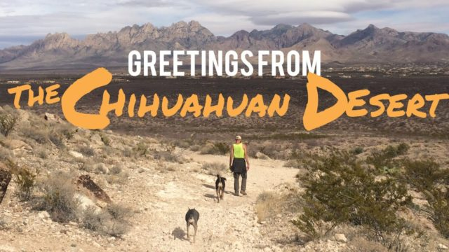 Greetings from the Chihuahuan Desert, New Mexico