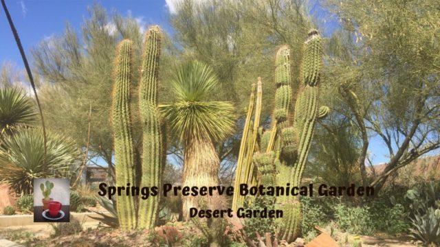 Springs Preserve Desert Garden part 2/ Plants of the Mojave desert