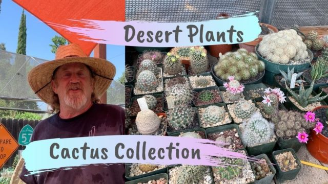 Rob Roy's Cactus and Desert Plants Collection (part 1)