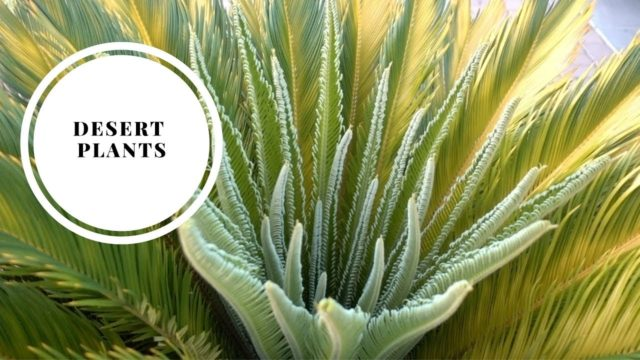 Desert Plants | Lets walk and talk Arizona Plants