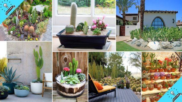 140+ Sharp Cactus Garden Ideas | Garden Ideas