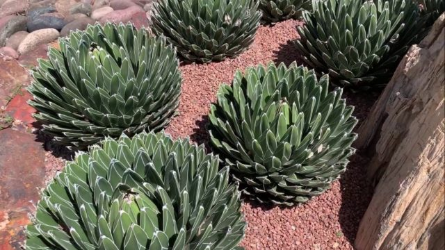 Beautiful Desert Landscaping 2019