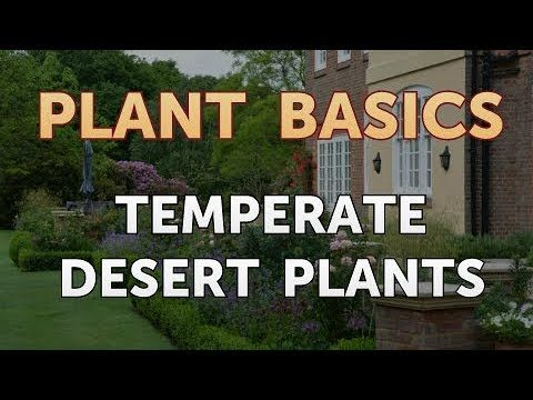 Temperate Desert Plants