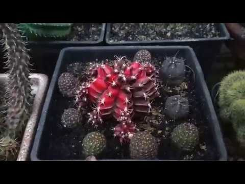Succulent plant tour of few more succulents at home – Page 8