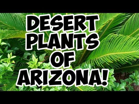 Desert Plants Of Arizona! 🌴