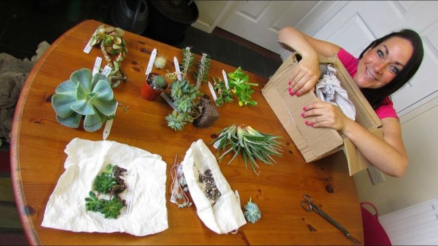 UNBOXING our wonderful Cacti & Succulent Plant Gifts from Shane Walsh