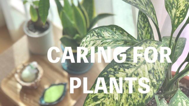 [おうちモンテ] 植物の世話をする / Caring for Plants【idées montessori(イデー・モンテッソーリ)】