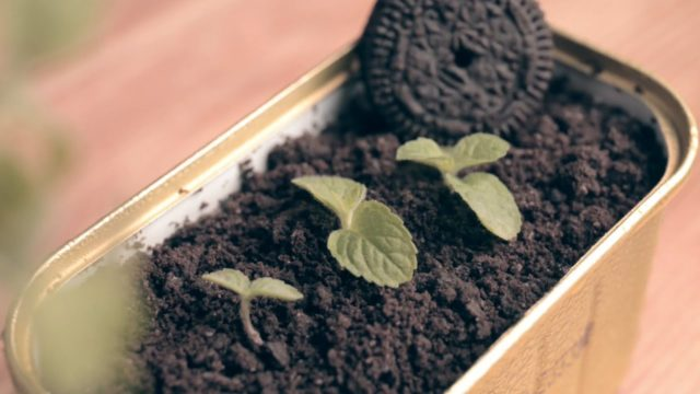 Oreo Potted Plants| Creative Dessert