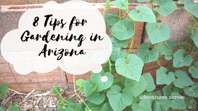 8 Tips for Gardening in Arizona   Adventures Across
