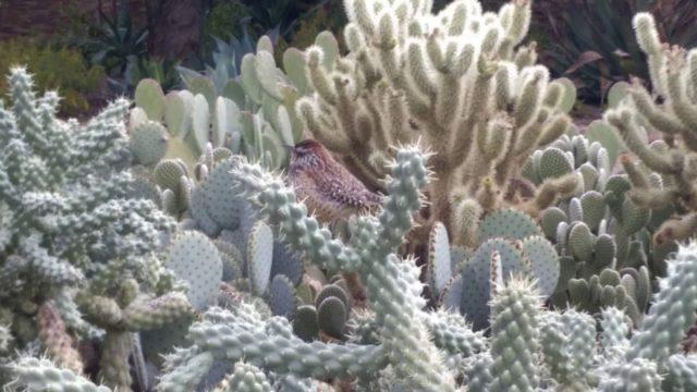 沙漠植物花園Desert Botanical Garden Phoenix Arizona鳳凰城 亞利桑納