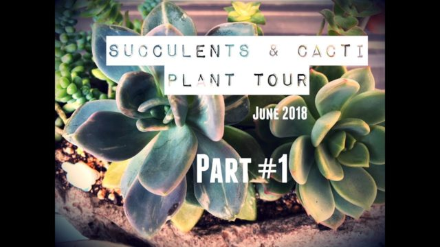 June 2018 SUCCULENTS & CACTI PLANT TOUR | Part #1
