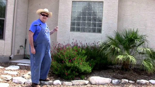 Landscaping To Beat the Drought