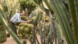 Amazing Cactus Garden and Collection, Gilgandra, Australia
