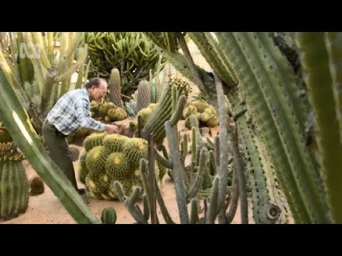 Amazing Cactus Garden and Collection, Gilgandra, Australia