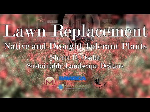 Workshop: Lawn Replacement with Native and Drought Tolerant Plants