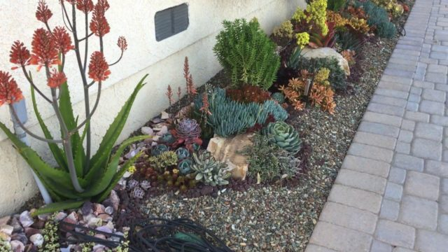 Succulent Garden One Year After Installation