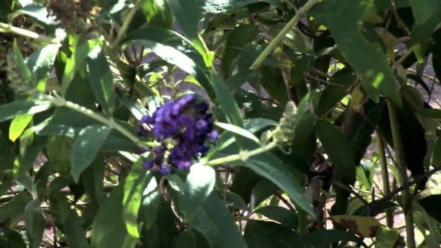 Butterfly Garden, El Paso Botanical Garden