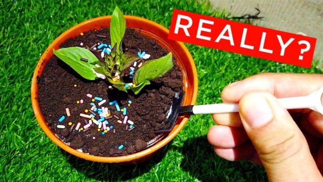 Dessert Gardening Genesis