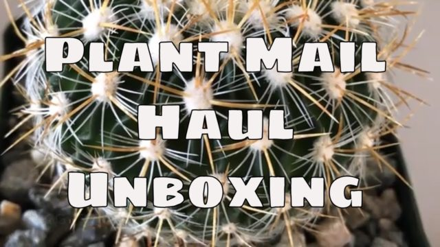 🌴Planet Desert Plant Mail / Haul Unboxing / Cactus and succulents /Garden / Houseplants 🌴
