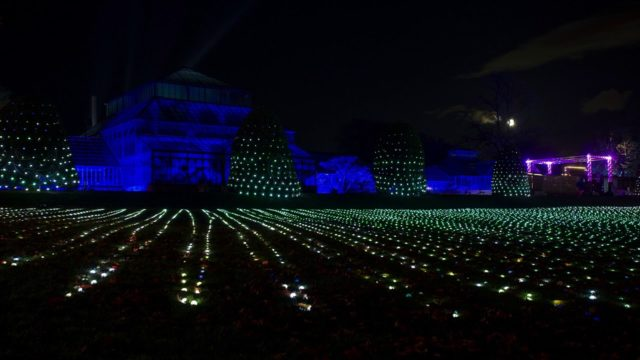 GlasGLOW at the Botanic Gardens, Glasgow.