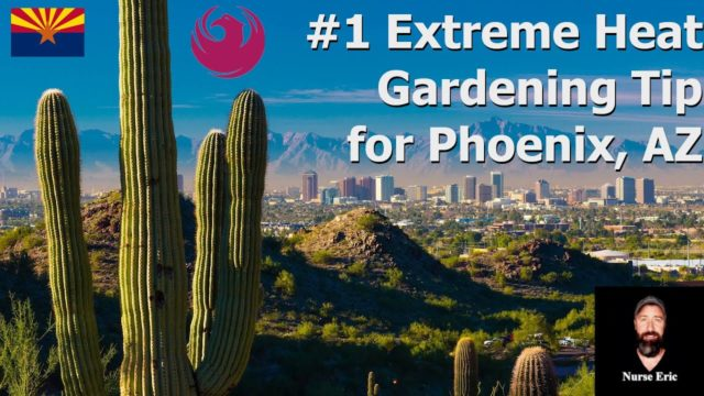 #1 Extreme Heat Gardening Tip for Phoenix, AZ (July 2019)