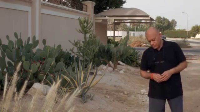 MGS S01E04 – Xeriscaping: gardens that need very little water