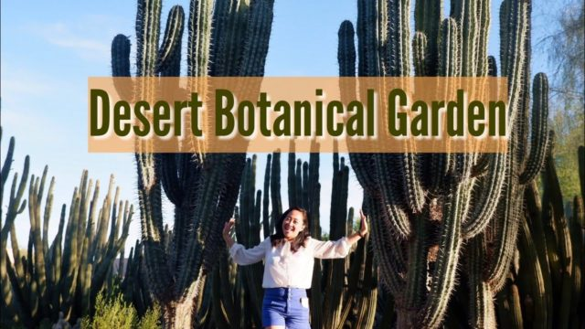 Gigantic Cacti, Vibrant Succulents and Plants inside the  Desert Botanical Garden  Phoenix, Arizona