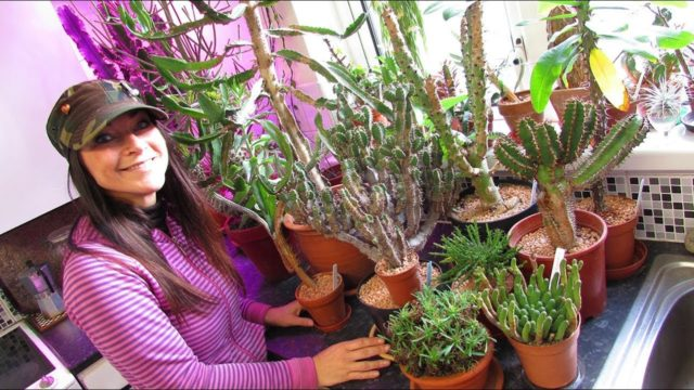 My Euphorbia Succulent Plants Collection – Plant Tour