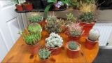 Our BEAUTIFUL & RARE NEW Cacti & Succulents from our Cactus & Succulent Society