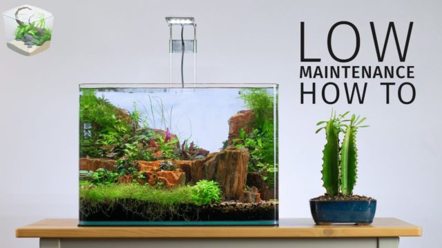 HOW TO: Low Maintenance Nano Aquascape