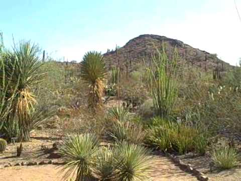Phoenix Botanical Gardens 360