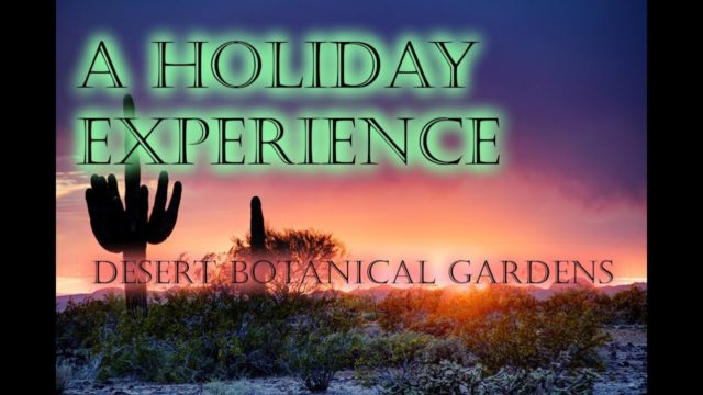 The Electric Gardens   Phoenix Desert Botanical Gardens