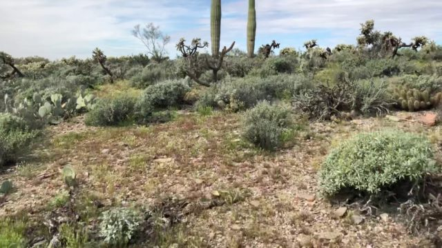 Walking in the Arizona Desert