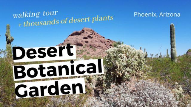 Desert Botanical Garden Phoenix Arizona | EP13