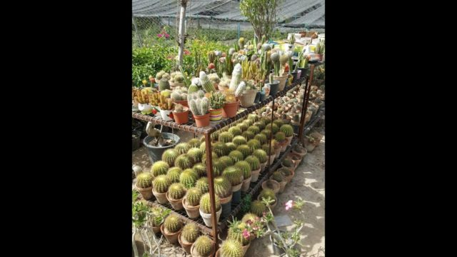 CACTUS desert plant collection !!!!!!!!!!!!!!!!!!!!!!!!