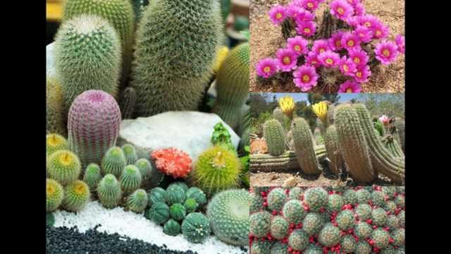 The Best Cactus Plants to Grow in Your Garden