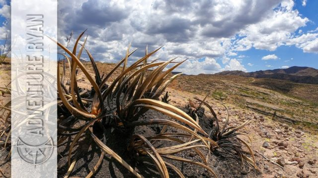 Wildfire Damage, Desert Plant Stuff, and Wilderness Therapy Thoughts