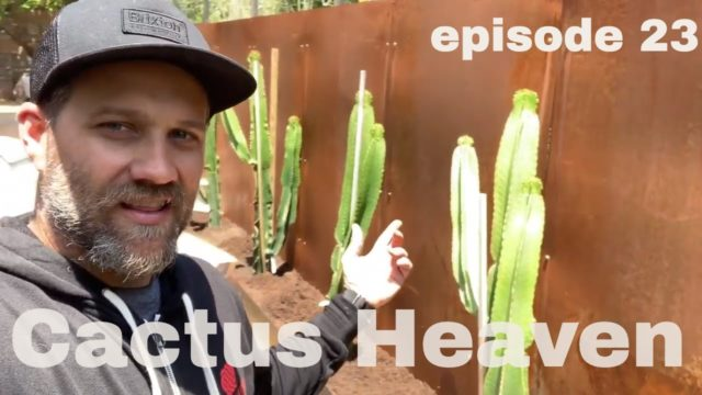 How to plant Cactus: Euphorbia Injen