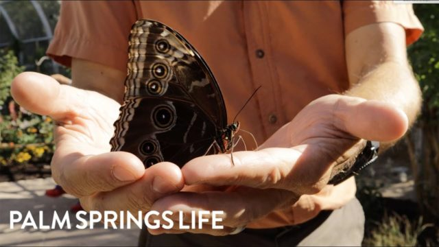 The Living Desert Zoo & Gardens Presents Winged Wonders 2019 | PALM SPRINGS LIFE