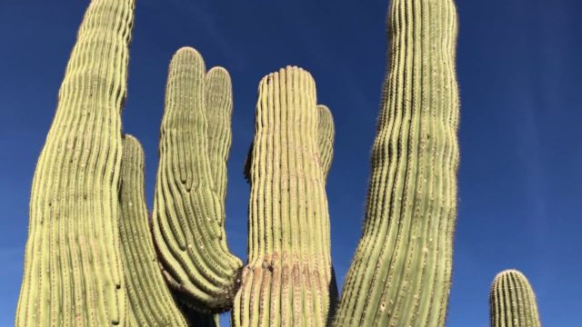 Arizona Desert Scenery – Exploring The Cacti