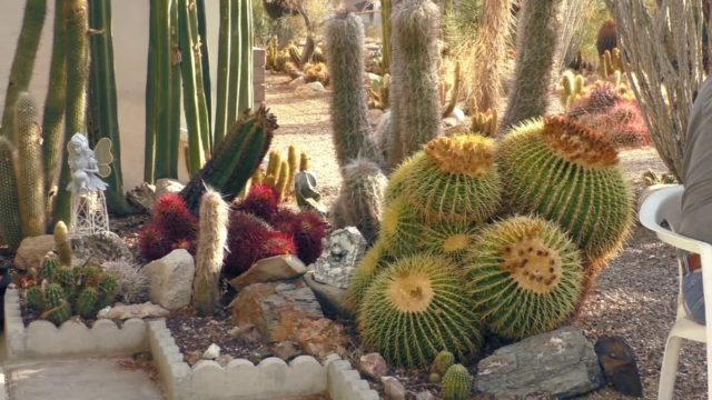 Xeriscaping and Growing Cactus