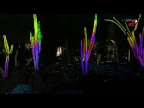 Mind-blowing electric desert botanical garden in Arizona