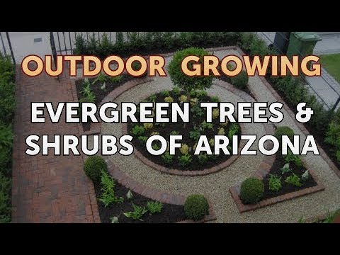 Evergreen Trees & Shrubs of Arizona