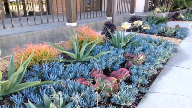 Drought Tolerant Landscape Design Pictures