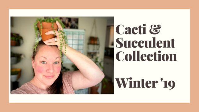 Cacti & Succulent Collection | Tour my Winter desert plants! | 2019 edition