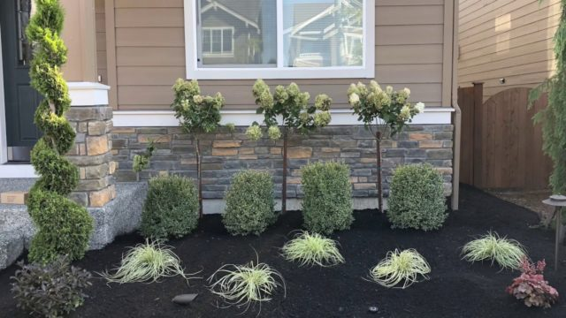 How to Landscape a Front Yard Quick and Easy way.
