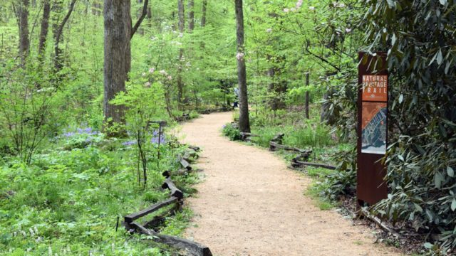 Making It Grow – South Carolina Botanical Garden (Mountain Region)